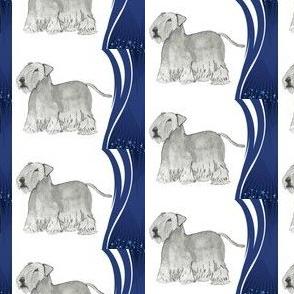 Cesky Terrier Stars