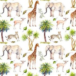 Safari Stop