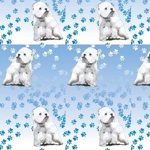 Westie West highland terrier