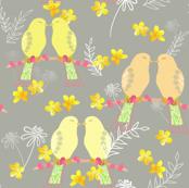 Yellow Lovebirds