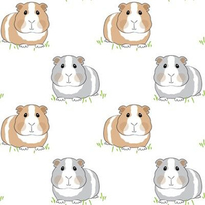 guinea-pigs-on-grass
