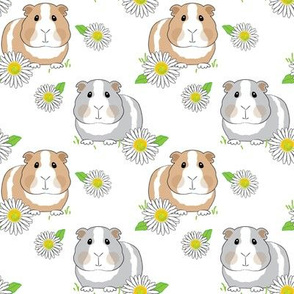 guinea-pigs-with-daisies