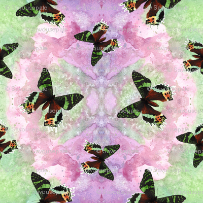 Urania ripheus butterfly watercolor