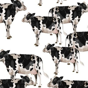 Cows Cows Cows - White background