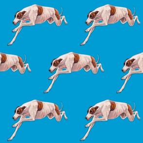 brindle and white running greyhound
