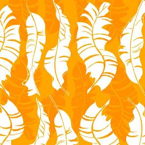 Conga Mango Orange 150