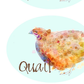French Sketch Quail Blue