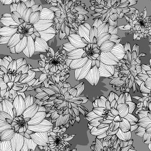 white dahliablossoms