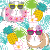 tropical guinea-pigs-on-white