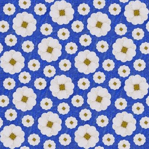 Daisies in 2 sizes over Blue