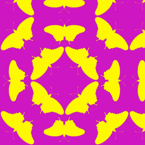 radioactive butterflies magenta yellow