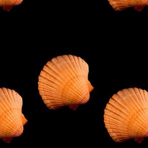 seashell line
