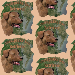 Chesapeake_Bay_retriever2