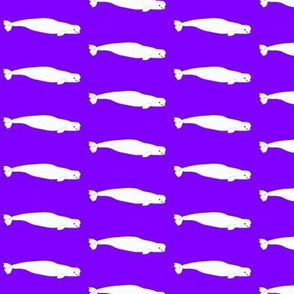 Beluga Whales in  Purple
