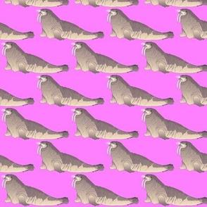 Walrus in pink