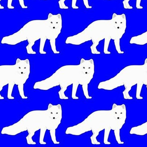 Arctic Fox in Blue