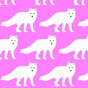 Arctic Fox in Pink