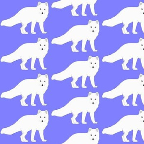 Arctic  Fox in purple