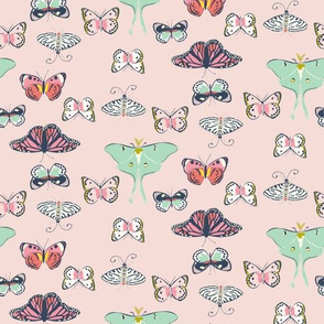 camp_butterfly