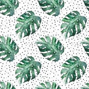 Monstera Tropical Leaves