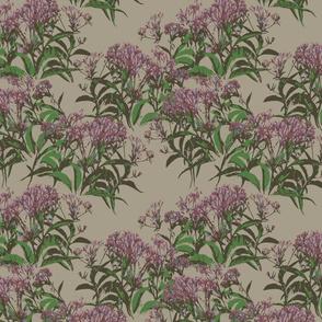 pink milkweed or phlox