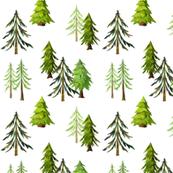 Pine Tree Forest - Woodland Trees C