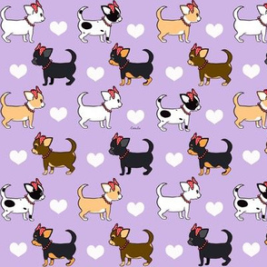 Chihuahuas Love lavander girls S