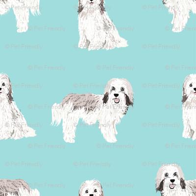 havanese simple dog breed pure breed fabric light blue