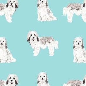 havanese simple dog breed pure breed fabric light blue