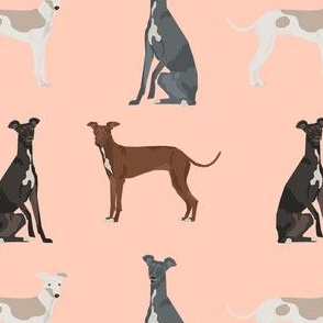 italian greyhound simple  dog breed fabric peach