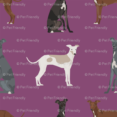 italian greyhound simple  dog breed fabric mauve
