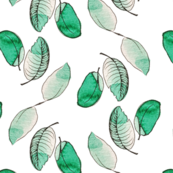 pale green leaves