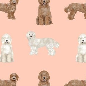 labradoodle simple unique dog breed fabric blush