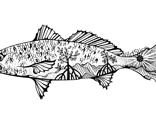 Redfishvectorsigned_thumb