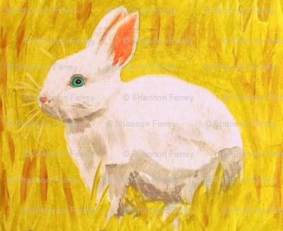 bunnies larger