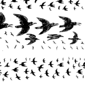 caw_caw_black_white