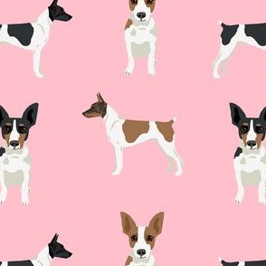 Rat Terrier simple dog breed fabric pink