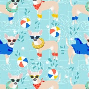chihuahua pool party  -cute dogs swimming