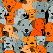 Dogs are compassionate orange