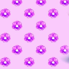 Yorkie Violet pink L