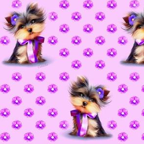 Yorkie Violet pink M