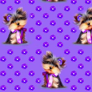 Yorkie Violet purple L