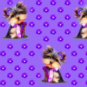 Yorkie Violet purple M