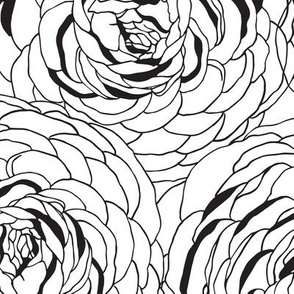Ranunculus Black & White