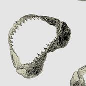 shark-jaw