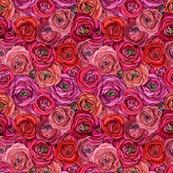 Red Rose // Pink Rose // Floral //