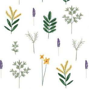 wild herbs