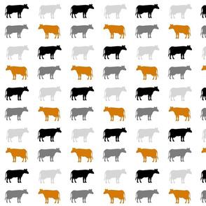 cows gray black orange
