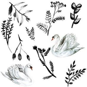 Black and White Feminine Swans