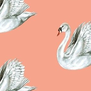 Pretty Swan on Coral Pink
